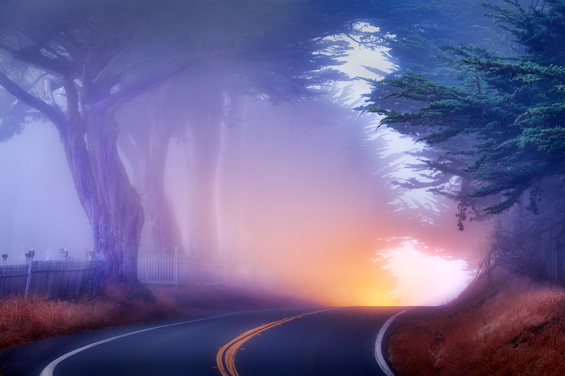 Foggy Road, Mendocino County, California