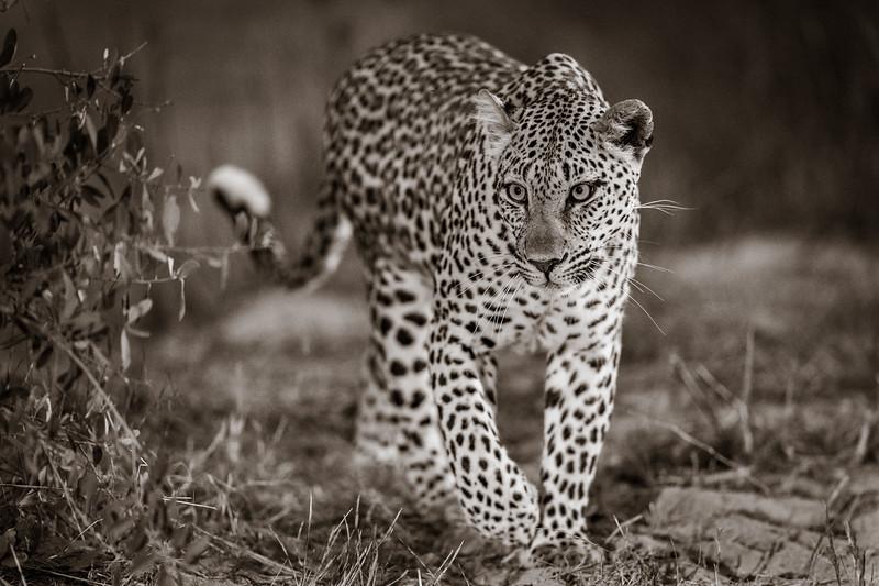 LeopardHills-20191029-2547.jpg
