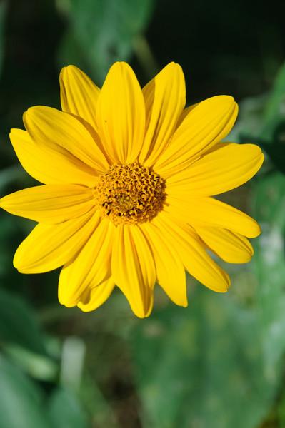 Flower in San Cristobal