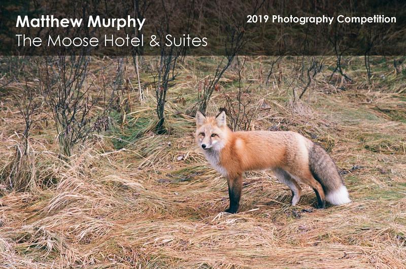 Matthew Murphy 1.jpg
