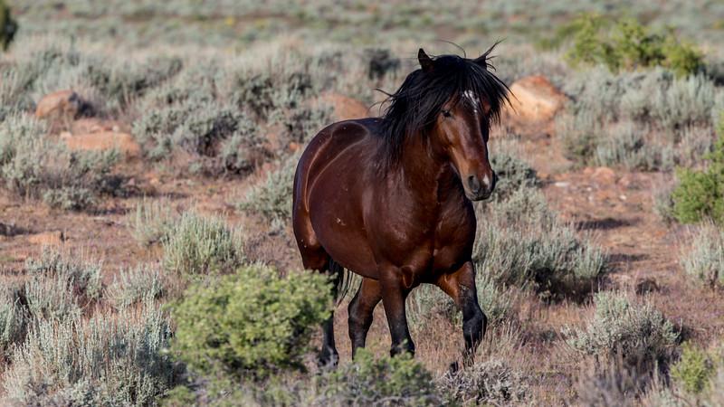 Wild Mustangs 2019-19.jpg