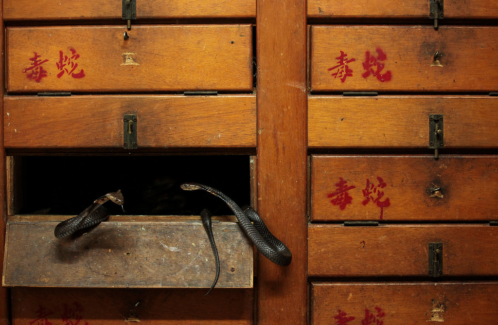 ". Two snakes are seen inside their compartment in wooden cupboards labelled ""Poisonous Snakes\"", at a snake soup store in Hong Kong January 29, 2013. REUTERS/Bobby Yip"