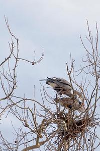 Bath Road Heronry
