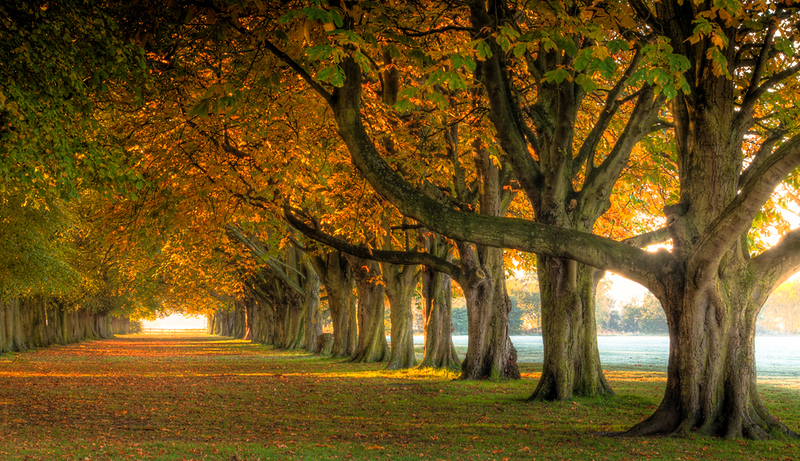 Coombe chestnuts autumn.jpg