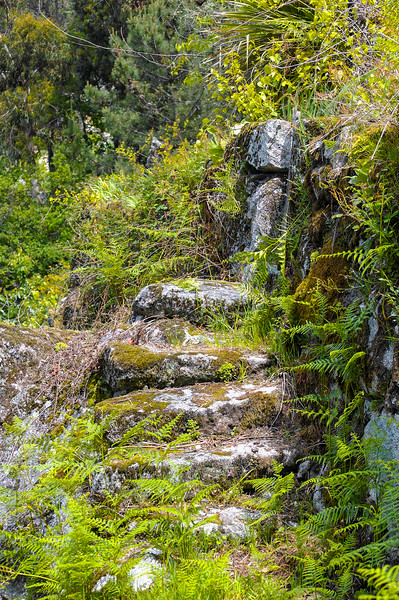 Vouzela-PR2 - Um Olhar sobre o Mundo Rural - 17-05-2008 - 7429.jpg