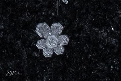 snowflakes-1641.jpg