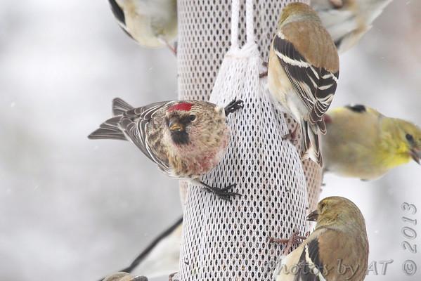 2013-03-01>23 Yardbirds