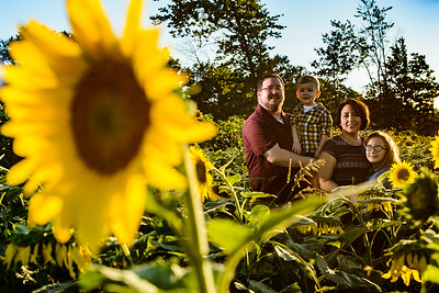 Sunflower Field Family Session