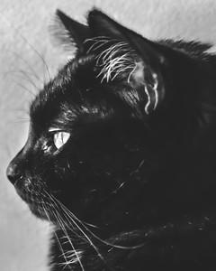 Black & White ~ 2017