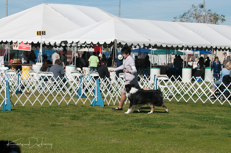 20170205_Australian Shepherds_Lost Dutchman Kennel Club-68.jpg