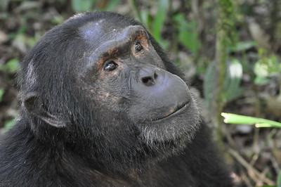 2016/12 - Uganda:  Kibale Forest National Park