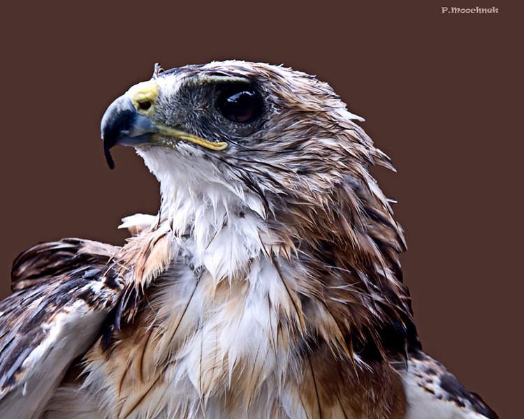 boydsparkhawk2.jpg