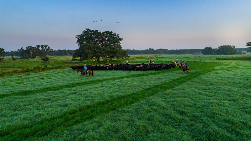 Barthle Cattle  (17 of 27).jpg