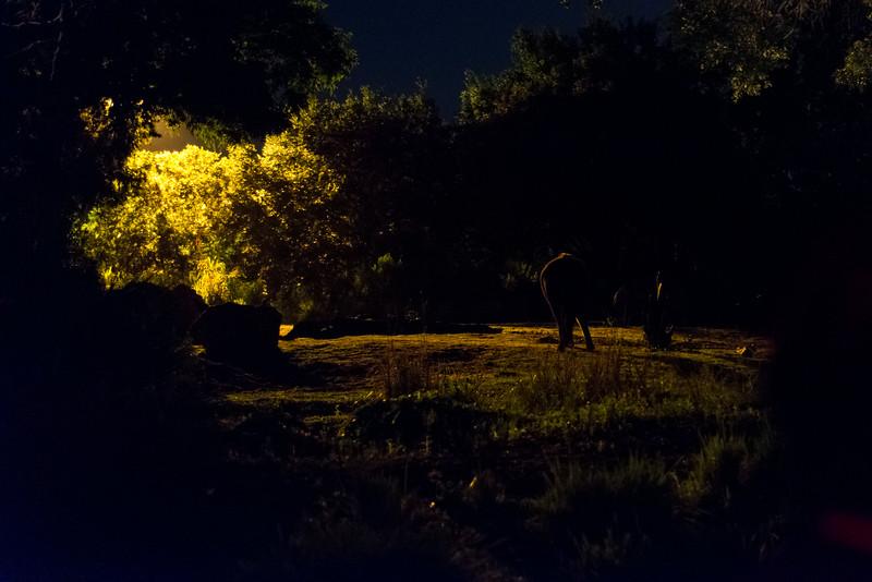 Kilimanjaro Safaris at Night - Elephants - Disney's Animal Kingdom, Walt Disney World