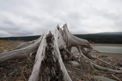 29 Day 5 Sat: Driftwood by Lake Sherburne