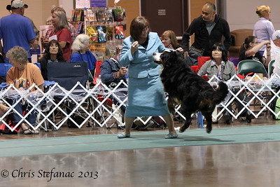 American Bred Dog BMDCA 2013
