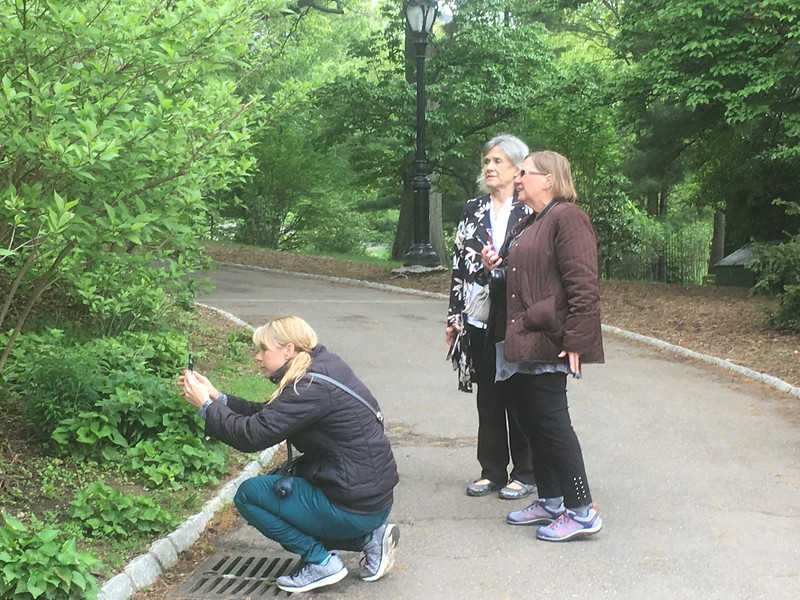 Central Park 9.jpg