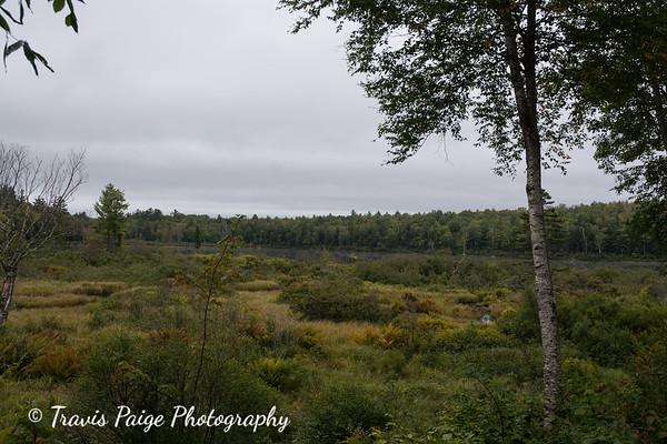 Mountain Biking in the Green Woodlands