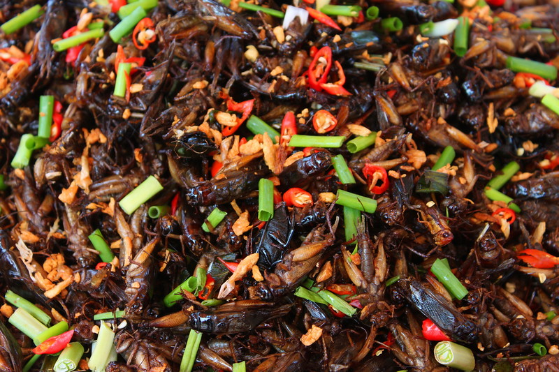 Chillies and morning glory added to a mixture of bugs for maximum flavor