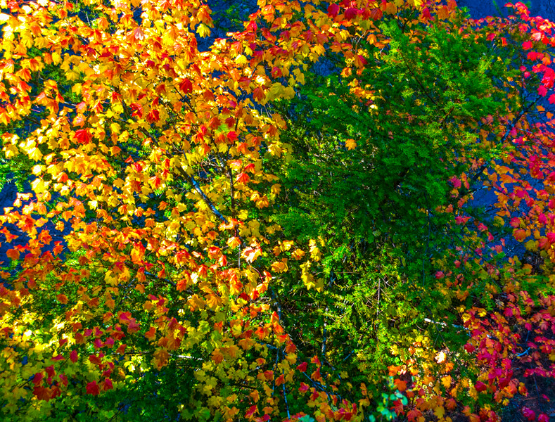 Rogue River_Fall Colors-1.jpg