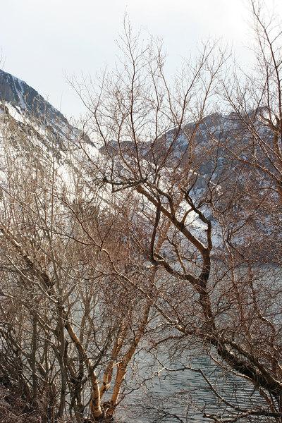 lake trees and mountain.jpg