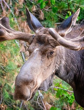 Algonquin Provincial Park - June 2018