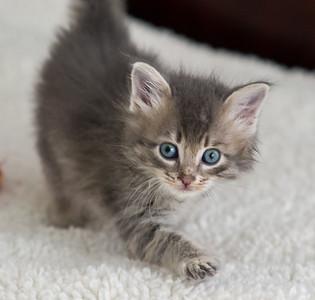 G&G Foster Kitties - May 2015