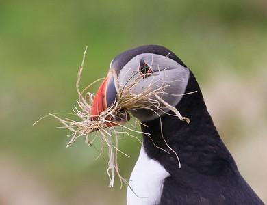 Birds in Taxonomic Order