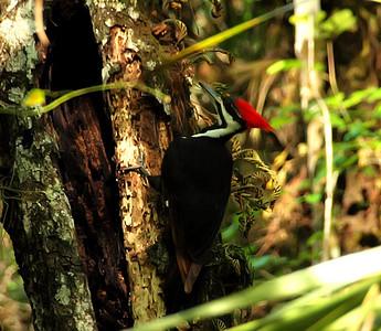 Florida Birds - March 2011