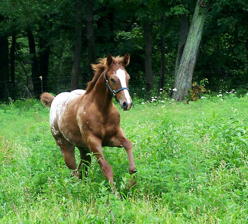 Continue In Gold Foals