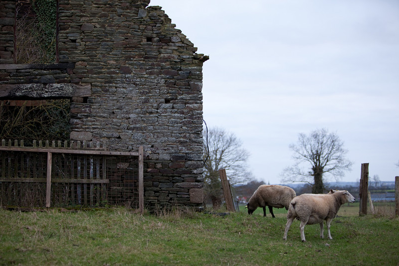 Stone barn and sheep on the road to somewhere. The French countryside is my favorite place to drive.