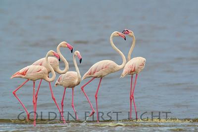Flamingos & Storks