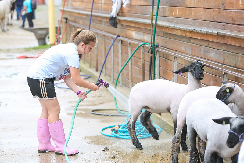Sheep Show-21.jpg