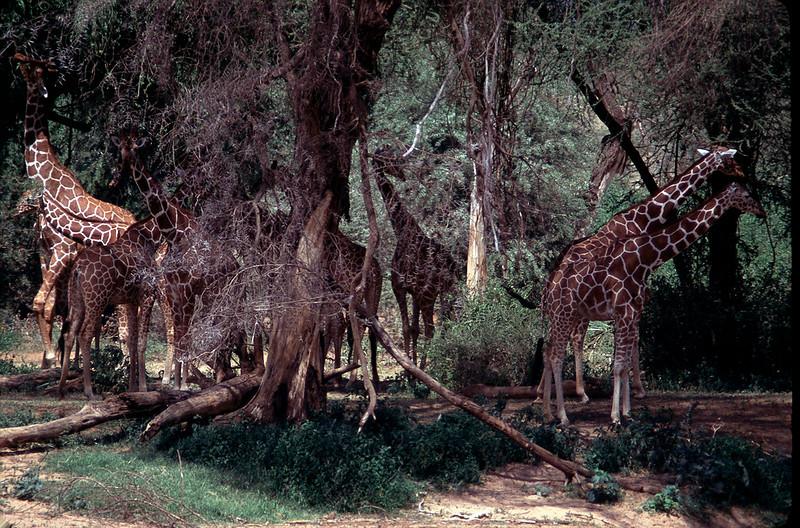Kenya1_060.jpg