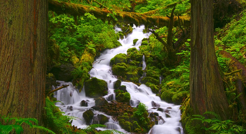 Wahkeenah Creek
