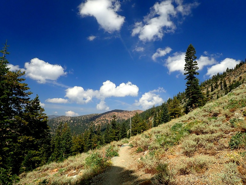 Mount Eddy Shasta-Trinity National Forest California