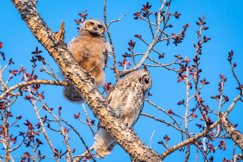 Owl-17.jpg