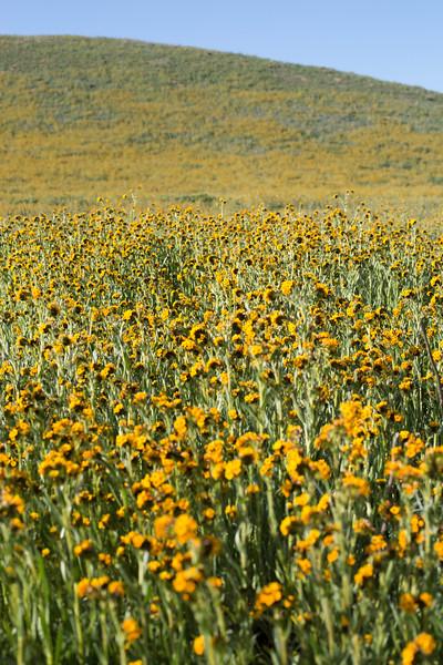 mroe yellow fleurs.jpg