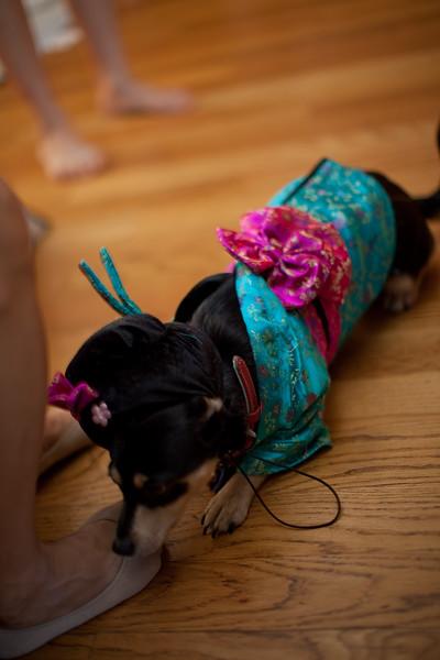 Dog-sushi-halloween2-10.jpg
