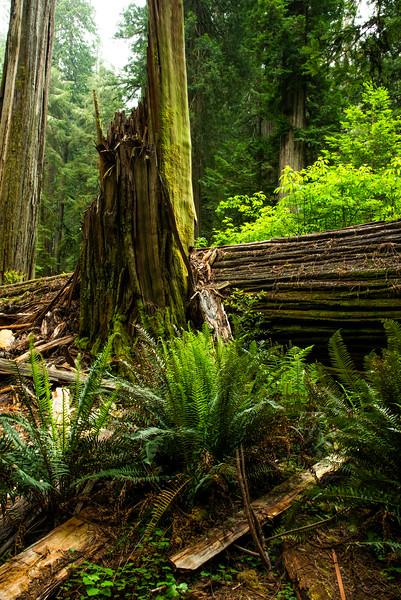 redwoodsFin29-1154.jpg