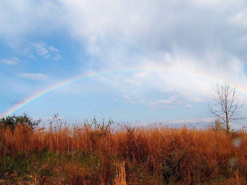 Rainbow captured about a mile over the line from PA into West VA. April 21, 2009 as visible from Rt # 79S.
