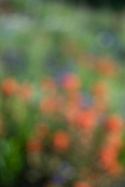 wildflowers-blurry_DSC0253.jpg