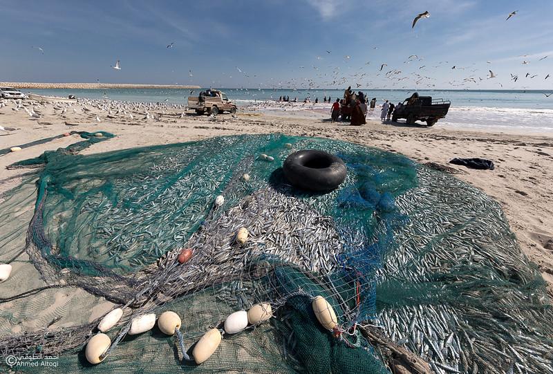 Sardine Season (22)- Dhofar.jpg