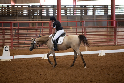 Horse 478