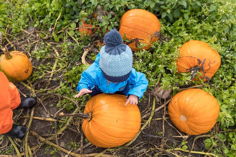 CIK-181007-apples and pumpkins-API_5827.jpg