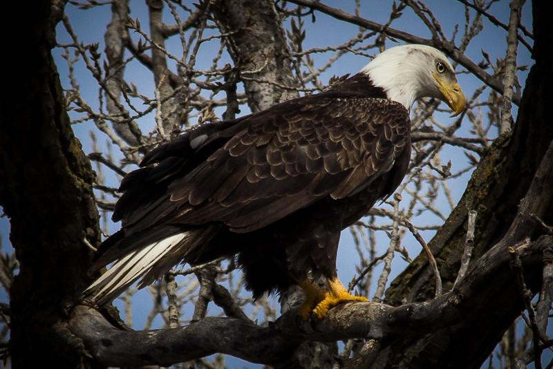 Eagle Beautiful-7057.jpg