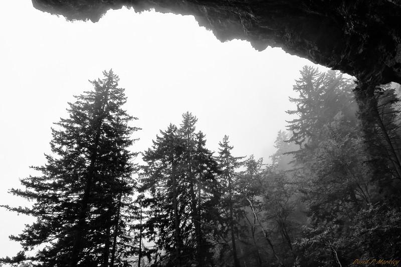Foggy Outlook