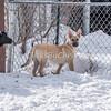 Dogs - Saturday, Feb. 7, 2015 - Frame: 3646