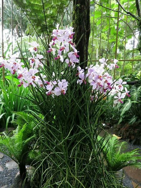 1707 Orchid Garden.jpg