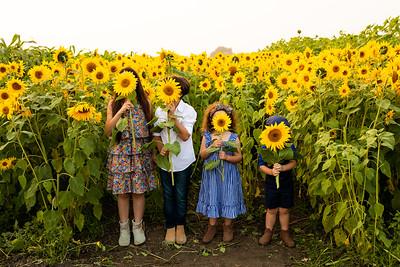 J Lapetina Kids Sunflowers 2020